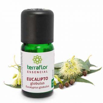 Óleo essencial de eucalipto globulus 10ml - imagem meramente ilustrativa